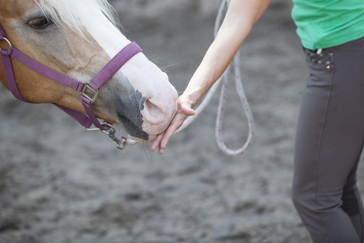 Als je paard rustig zijn neus en mond bij je hand houdt, kun je je hand omdraaien en openen.
