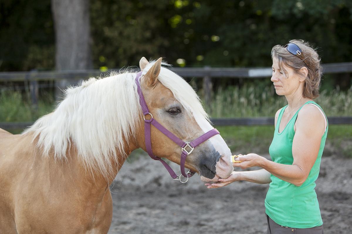 Als je paard netjes een brokje aanneemt, kun je hem aanleren wat de betekenis is van de clicker.