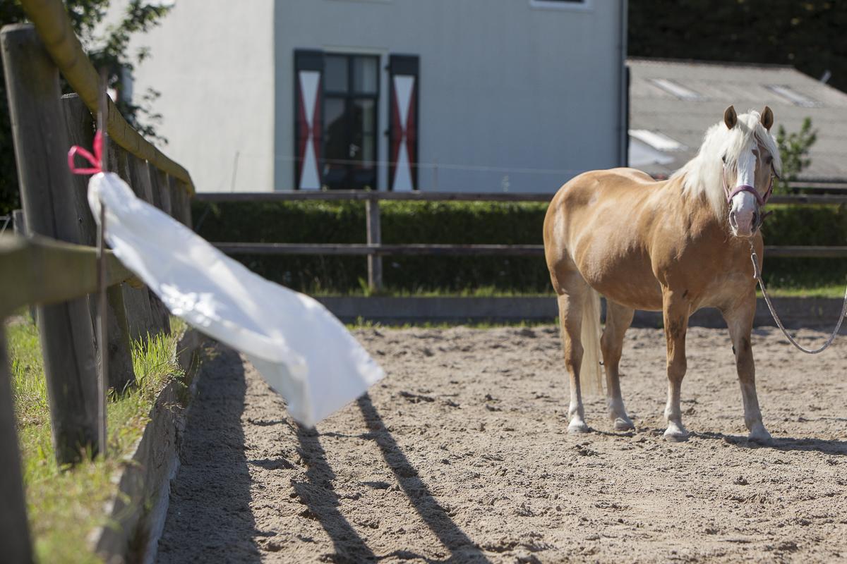 Als je paard rustig naar het enge voorwerp kijkt, beloon je hem met een click en uiteraard een snoepje.