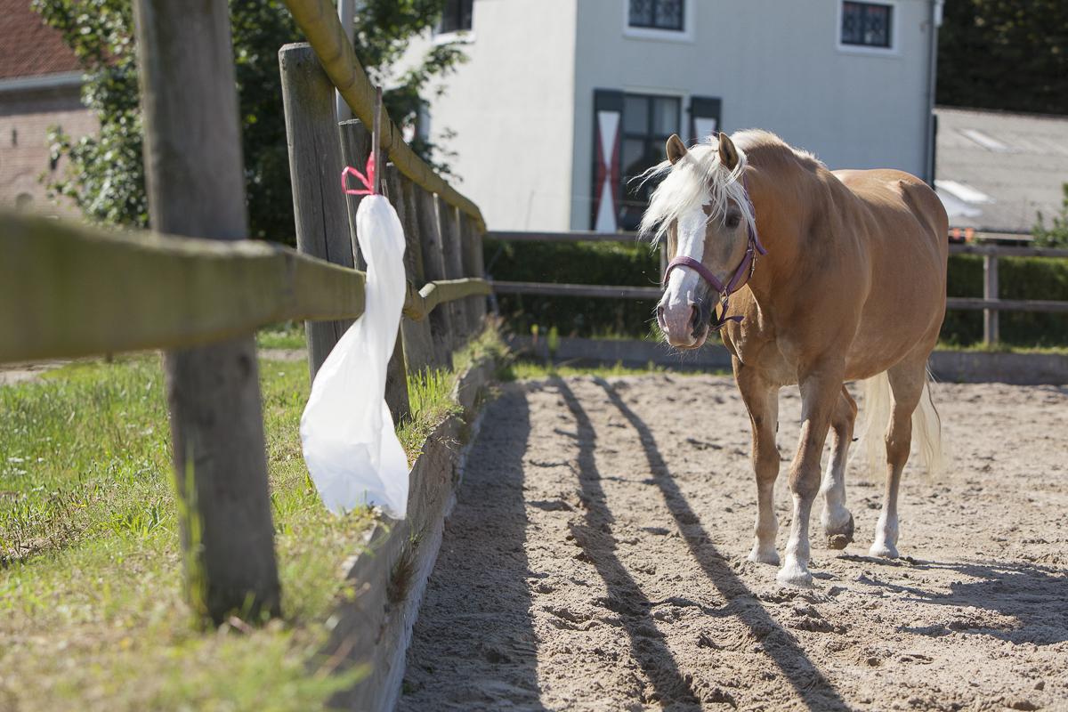Begeleid je paard met de clicker stapje voor stapje naar het enge voorwerp toe.