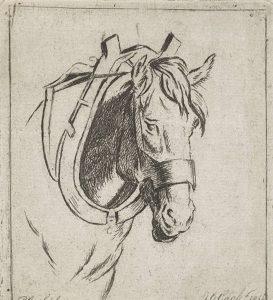Als je met bit rijdt en te veel druk op de teugels hebt, kan je paard last krijgen van zijn mond. Het bit is klassiek geconditioneerd.