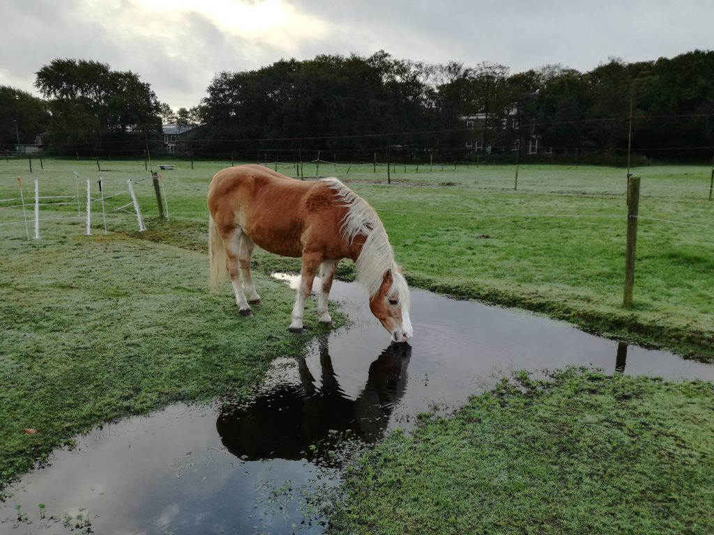 Een stal met alles erop en eraan kan vrije beweging op een leuke wei niet vervangen.