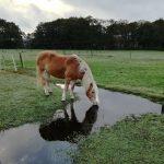 Verrijking is niet genoeg om het leven van je paard op stal beter te maken