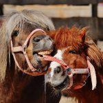 Spel of agressie bij paarden?