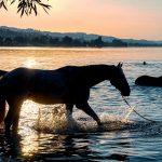 Reageer je als je paard schraapt?