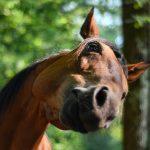 Wil je meer weten over het gedrag van je paard?